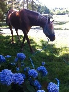 summer at the ranch