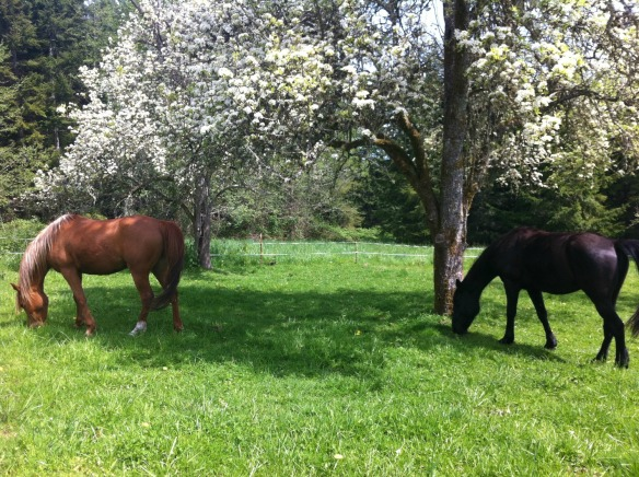 the boys grazing